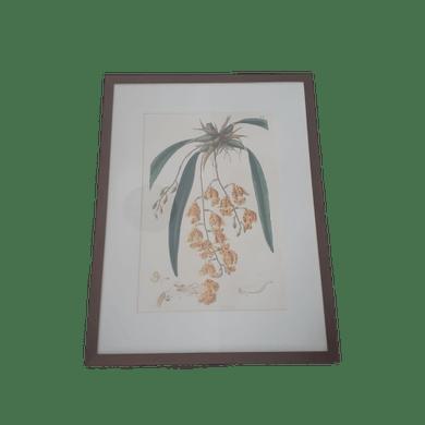Gravura Orquídeas Amarelas Com Vidro e Moldura Marrom
